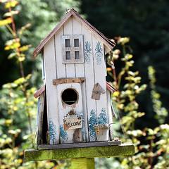 Birds house. (robárt shake) Tags: vogelhaus birdhouse nature garden garten lustig wood ökologisch ökologie logisch logik bemalt basteln freizeit natürlich house haus wohnung wohnen unterkunft windschief schief architektur architektonisch baustil planung gestaltung