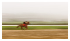 Speed (bprice0715) Tags: canon canon5dmarkiii panning icm horse racehorse thoroughbred saratoga saratogaracetrack motion blur colorful red green fineart action canoneos5dmarkiii
