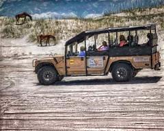 Wild Horse Adventure Tours in  North Carolina's Outer Banks (PhotosToArtByMike) Tags: wildhorse horse corollawildhorses mustangs bankerhorse curritucknationalwildliferefuge wildhorsetours horsetours outerbanks atlanticocean 4wheeldrive obx 4wd dunes beach wildliferefuge sanddunes wildhorses shorebirds northcarolina nc outerbanksnorthcarolina carolinadunes curritucksound currituckcounty sea seashore shoreline