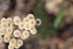 Sommerblumen, die Zweite (ingejahn) Tags: rinella sonntagsinkalkara malta maltalove sommer sonne strand baden wasser pflanzen