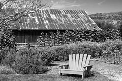 Quiet Corner _ bw (Joe Josephs: 3,166,284 views - thank you) Tags: california californialandscape travel travelphotography westcoast rural rurallandscape ruralroad vineyard quiet scenic quietscene tranquil barn chair bw blackandwhite blackandwhitephotography monochrome