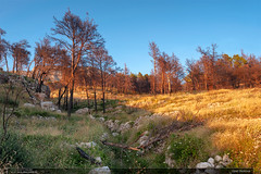 Úpatí Biokova (jirka.zapalka) Tags: croatia landscape podgora summer evening trees pines afterfire
