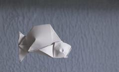Fish (Jose_Herrera_B) Tags: origami joseherrera joseherreraorigami paperart papiroflexia origamifish mexicanart artemexicano fabriano origamidesign