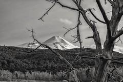 Volcán Llaima (felipenavarrete1) Tags: regióndelaaraucanía chile cl conguillio araucaníaandina llaima loxia2050 loxia250 loxia sony e nature landscape monochrom