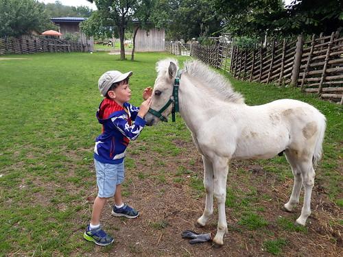 Clemens der Pferdeflüsterer
