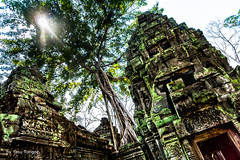Sun Lighting up the Lickens Covering Rocks of the Ta Prohm Temple, Cambodia-29a (Yasu Torigoe) Tags: sony a99ii a99m2 sonyilca99m2 siemreap siem reap angkor archeological archeology park history ancient architecture temple religion religious buddhism buddhist buddha historical ta prohm taprohm jungle trees tree tombraider banyan tomb crypt laracroft lara croft suryavarman vishnu stonework buildings surreal sculpture structure deityroots landscape overgrown vines art theravada photograph photography dynamic travel asia cambodia southeast deity ruins khmer roots devatas