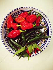Peperoncini (vcaputo) Tags: peperoncini peperoncino piatto rosso verde chilipeppers pepper hotpeppers