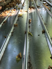 Leaves are falling (Rosmarie Voegtli) Tags: dornach iphone sooc vanishingpoint leaves