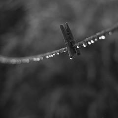 bokeh (0verexposed) Tags: leica summicron line bokeh bw monochrom clamp rain drops water typ246