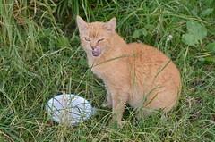 INTERNATIONAL CAT DAY (LitterART) Tags: catday internationalcatday weltkatzentag cat katze chat