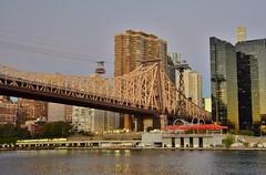 Roosevelt Island, 10.11.16 (gigi_nyc) Tags: sunrise rooseveltisland nyc newyorkcity queensborobridge eastriver