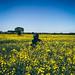 YellowField3