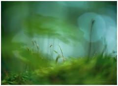 Green storm (Petra Ries Images) Tags: kodakanastigmat63mmf27 moss moos green grün forest wald bokeh shallowdepthoffield manualfocus vintagelens adapedlens ghostly smoky nature