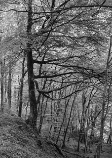 Dolaucothi Woodland Trail