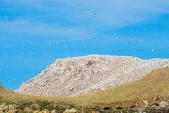 Tour des 7 iles de la côte de granit rose