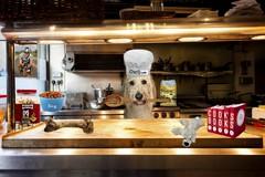 Chef Loki (redmufffan) Tags: cook manipulation dog goldendoodle chef pets humor fun