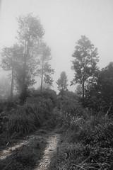 MIni adamspeak (Anuradhagraphy) Tags: anuradhagraphy amithanuradha srilanka sunday ella edge wonderofasia wild summer miniadamspeak photography upcountry travel trekking travelworld trainporn travellfie tree mist miracle