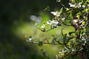 Ivy (Laineyb93) Tags: lightandshade shadesofgreen ivy green bokeh sun leaf leaves colourful catchycolours garden nikon nikond7000 nikonworld nikoncafe