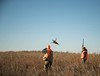 Kansas Pheasant Hunt 39
