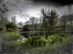 Bonython Gardens (Bobinstow2010) Tags: lake pond arty topaz photoshop green palm plants spring cornwall bonythongardens opentopublic garden