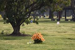 Visita al Papá_JCV4851 (DelRoble_Caleu) Tags: parque del recuerdo cementerio región metropolitana delroblecaleu julio carrasco valenzuela