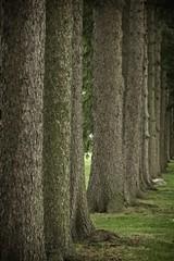Bark! (steve.schlick) Tags: whitby parkrun 52in2018 texture bark tree grass rock trunk green