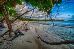 My kind of beach! (tquist24) Tags: hdr lindquistbeach nikon nikond5300 outdoor stthomas usvirginislands virginislands beach clouds deserted driftwood geotagged island morning ocean sky tree trees tropical water wave