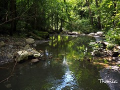 Por el Ripolles (Gatodidi) Tags: ripolles rio agua montaña rocas sendero senderismo camino segadell girona jardines bosques verde vegetación catalunya cataluña