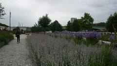 Une promenade dominicale sur les quais de Rouen en fleurs (jeanlouisallix) Tags: rouen seine maritime haute normandie france quais fleurs jardin garden nature paysage panorama landscape