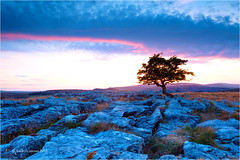 Winskill Stones (Sandra Lipproß) Tags: winskillstones limestonepavement yorkshire yorkshiredales malham sunset lonetree england landscape langcliffe uk europe ribblesdale karre schratte kalkstein tree baum sonnenuntergang greatbritain outdoor nature