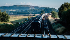 Out of the shade (Peter Leigh50) Tags: gbrf shed class 66 stone train hopper fujifilm fuji field farmland freight farm shadows sheep shade bridge signal semaphore trees track railway railroad rural rail xt10