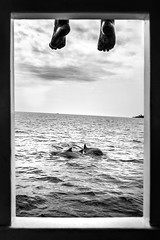 Dolphin watching - Maldives - Black and white photography (Giuseppe Milo (www.pixael.com)) Tags: photo dolphins nature clouds maldives bw dolphin contrast sea candid travel feet photography black blackandwhite boat sky geotagged white kamadhoo northprovince mv onsale