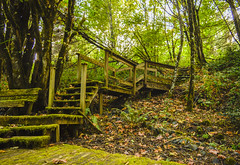 Moss Steps (AndrewG photos) Tags: moss steps green grass trees bridge seat bench later swing deck wood old