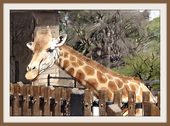 Animals are such agreeable friends - they ask no questions; they pass no criticisms. (George Eliot) (boeckli) Tags: giraffe tiere animals zoo taronga tarongazoo sydney newsouthwales outdoor textures texturen texture textur ddg deepdreamgenerator photoborder