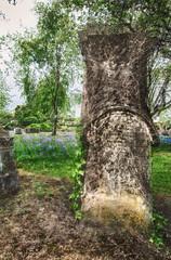 Local Necropolis (andygallacher3) Tags: necropolis graveyard gravestones trees plants flowers bluebells stone structure glasgow scotland gorbals nikon d300 sigma hdr lightroom