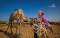 camel fair, rajasthan (Albert Photo) Tags: camelfair rajasthan india asia nomadic sky animal people