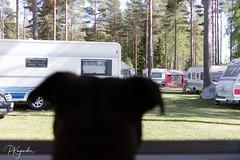 6R0A0016.jpg (pka78-2) Tags: sfc camping kokemäki pitkäjärvi motorhome caravan