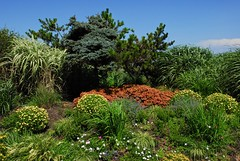 The gardens at smith point (sadrollieman) Tags: plant green red white yellow pine blue summer grass display ccd