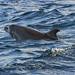Wild dolphins (3/3)