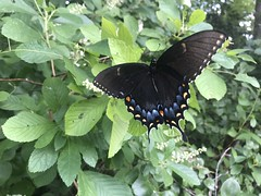 IMG_6708 (Kerry Wixted) Tags: jug bay wetlands sanctuary invasive plant class trip july 2018 natural history field studies anne arundel county md maryland