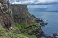 Causeway Coast (Denis Mc Carthy) Tags: giants causeway northern ireland landscape antrim cliffs giantscauseway northernireland