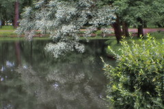 P6210033 (yaros66) Tags: achromat softfocus garden flowers trees