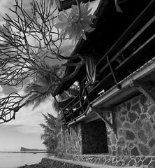 ----- (mo pena nom) Tags: mauritius ilemaurice nikon d810 beach plage coindemire gunnerscoin plumeria frangipanier tree seascape