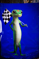 Little Racing Lizard (Thomas Hawk) Tags: america california geico goprograndprixofsonoma indycar indycarseries searspoint sonoma sonomacounty sonomaraceway usa unitedstates unitedstatesofamerica westcoast autoracing carracing lizard petaluma us