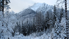 Zakopane-November'17 (168) (Silvia Inacio) Tags: zakopane poland polska polonia snow neve winter inverno tree árvore mountain montanha tatrymountains tatramountains tatras tatry