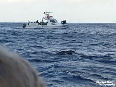 Hawaii_2017_1054 (Christen Ann Photography) Tags: 2017 dolphin dolphintour dolphins hawaii hawaii2017 holidays landscape november2017 ocean ohau usa