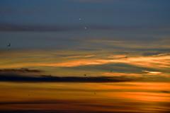 Wings soar at sunrise  -  (Selected by GETTY IMAGES) (DESPITE STRAIGHT LINES) Tags: bird birds seagulls gulls fly flight wings wingbeats silhouette botanybay botanybaybroadstairs sunriseoverbotanybay botanybaykent botanybayinbroadstairs bay seaside sunrise thegoldenhour goldenhour magichour themagichour lowlightphotography broadstairs kent england coast coastline coastal tide tidal water sea sunlight nikon d800 nikond800 nikkor200500mm nikon200500mm nikongp1 manfrotto tripod paulwilliams despitestraightlines flickr gettyimages yahooprojectweather morning getty gettyimagesesp despitestraightlinesatgettyimages