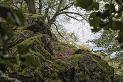 From here to top (mexou) Tags: deutschland germany wood trees oaks rocks rocky summer cold