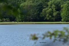 Egret across the Bay_1791 (2) (Porch Dog) Tags: 2018 garywhittington nikond750 nikkor200500mm wildlife nature lbl landbetweenthelakes betweentherivers kentucky