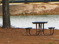 Picnic On An Island. (dccradio) Tags: lumberton nc northcarolina robesoncounty lutherbrittpark park citypark outdoor outdoors outside march spring springtime saturday grass lawn yard browngrass tree trees sand sandy dirt pineneedles pinestraw table picnic picnictable island water pond bodyofwater lake waves ripples pinecone pinecones canon powershot elph 520hs